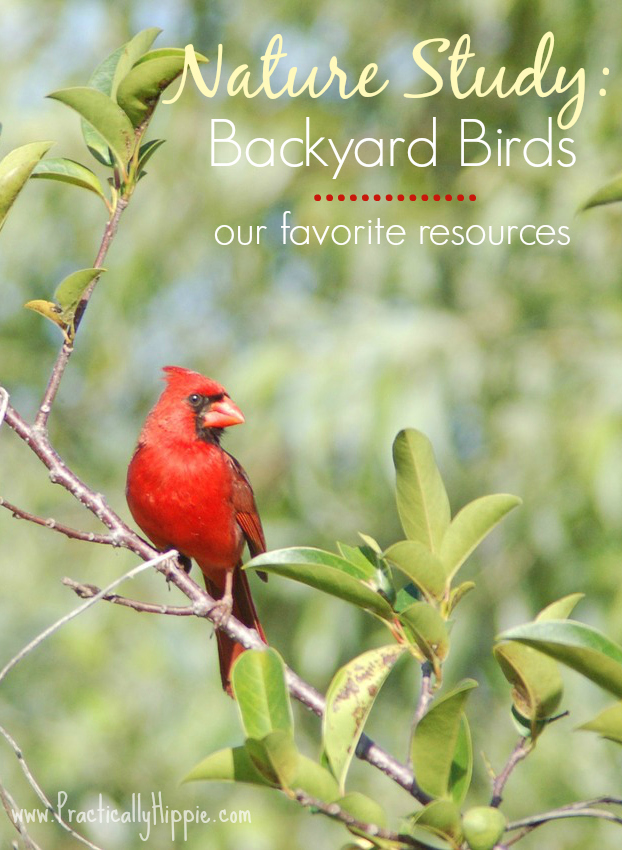 Nature Study: Backyard birds