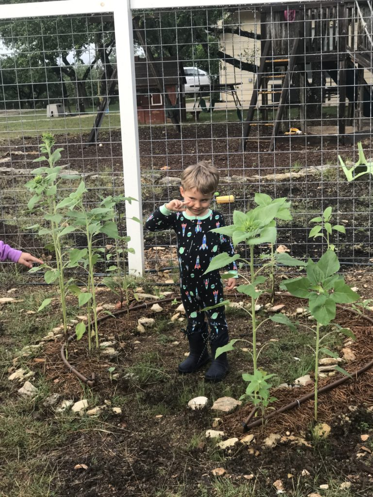 plant sunflowers for spring equinox